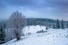 Mooi de winterlandschap met sneeuw behandelde bomen. Royalty-vrije Stock Afbeeldingen