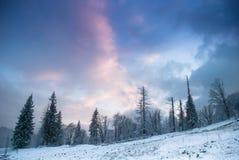 Mooi de winterlandschap met sneeuw behandelde bomen. Royalty-vrije Stock Foto's