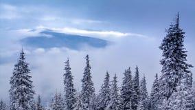 Mooi de winterlandschap met sneeuw behandelde bomen De bergen van de winter stock video