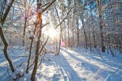 Mooi de winterlandschap met sneeuw behandelde bomen - zonnige de winterdag Stock Foto's