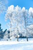 Mooi de winterlandschap met sneeuw behandelde bomen - zonnige de winterdag Stock Afbeelding