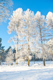 Mooi de winterlandschap met sneeuw behandelde bomen - zonnige de winterdag Stock Afbeeldingen
