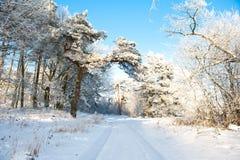 Mooi de winterlandschap met sneeuw behandelde bomen - zonnige de winterdag Royalty-vrije Stock Afbeeldingen