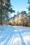 Mooi de winterlandschap met sneeuw behandelde bomen - zonnige de winterdag Royalty-vrije Stock Foto's