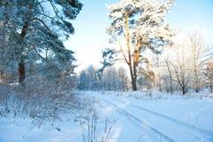 Mooi de winterlandschap met sneeuw behandelde bomen - zonnige de winterdag Royalty-vrije Stock Foto