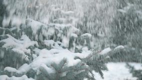 Mooi de winterlandschap met sneeuwsparren en dalende sneeuw stock video