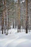 Mooi de winterlandschap met sneeuwsteeg in een bos Stock Fotografie