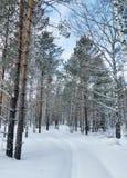 Mooi de winterlandschap met sneeuwweg in bos Stock Foto