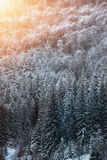Mooi de winterlandschap, sneeuw behandelde bomen Royalty-vrije Stock Fotografie