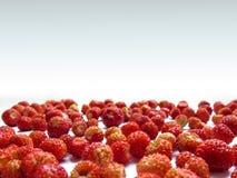 Mooi de zomerkader van wilde aardbeiclose-up op een witte achtergrond Royalty-vrije Stock Foto
