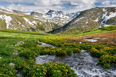 Mooi de zomerlandschap, Altai-bergen Rusland Royalty-vrije Stock Foto
