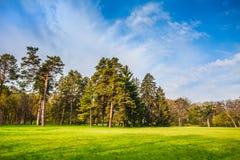 Mooi de zomerlandschap met gebied van groen gras Stock Foto's
