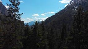 Mooi dicht groen bos in Dolomiet, Italië stock videobeelden