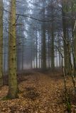 Mooi die beeld van een sleep in het bos in droge bladeren onder lange pijnboombomen wordt behandeld royalty-vrije stock foto