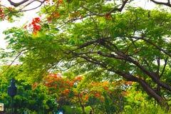Mooi die bloemen en boombos in de openbare tuin in de zomer wordt gemodelleerd stock foto