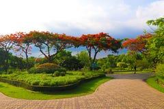 Mooi die bloemen en boombos in de openbare tuin in de zomer wordt gemodelleerd stock afbeelding