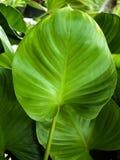 Mooi doorbladert bloem natuurlijke levensstijl Stock Fotografie