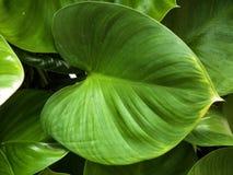 Mooi doorbladert de levensstijl van het bloemhart Stock Afbeeldingen