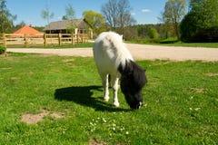 Mooi een poney op een landbouwbedrijf Stock Foto