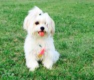 Mooi en aanbiddelijk puppy stock foto's