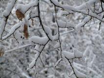 Mooi en de koele winter - Stock Foto's
