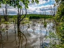Mooi en geheimzinnig moerassig bos Stock Foto