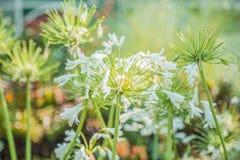 Mooi en groen royalty-vrije stock foto's