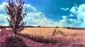 Mooi en kleurrijk fantasielandschap in een Aziatische purpere infrarode fotostijl stock fotografie