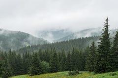 Mooi en vreedzaam nevelig groen het opzetten landschap stock foto