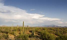 Mooi expansief schot van woestijnlandschap stock foto