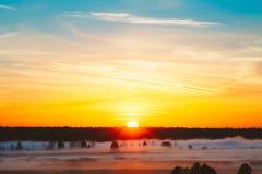 Mooi Forest On Sunrise Ochtendmist op Weide Stock Afbeeldingen