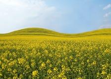 Mooi gebied met gele bloemen. royalty-vrije stock foto