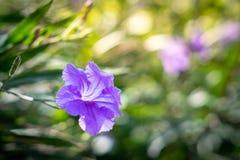 Mooi gebied van bloem royalty-vrije stock afbeelding