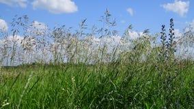 Mooi gebiedsgras tegen hemel in Rusland stock footage