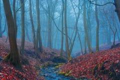 Mooi geheimzinnigheid bos met mist en een stroom Royalty-vrije Stock Fotografie