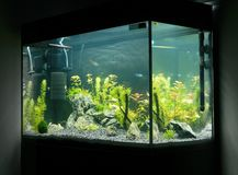 Mooi geplant tropisch zoetwateraquarium royalty-vrije stock fotografie