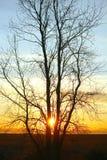 Mooi goud sunet achter boom Stock Foto