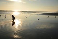 Mooi gouden strand Royalty-vrije Stock Afbeelding