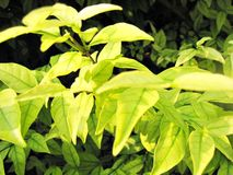 Mooi groen blad Stock Foto's