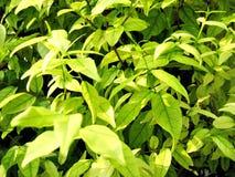 Mooi groen blad Stock Foto