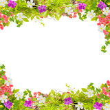 Mooi groen bladerenkader met bloem op witte achtergrond stock foto's