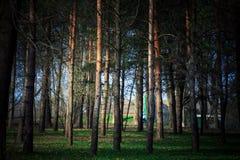 Mooi groen bos Royalty-vrije Stock Afbeeldingen