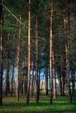 Mooi groen bos Royalty-vrije Stock Afbeelding