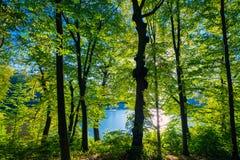 Mooi groen bos Royalty-vrije Stock Foto's