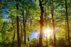 Mooi groen bos Stock Afbeelding