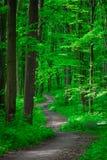 Mooi groen bos Royalty-vrije Stock Foto