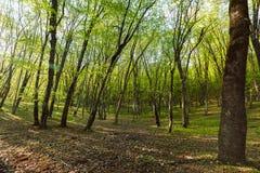 Mooi groen bos in de ochtendzon Stock Fotografie