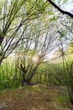 Mooi groen bos in de ochtendzon Stock Afbeelding