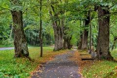 Mooi groen bos in de zomer De plattelandsweg, Weg, Manier, Steeg, Weg op Sunny Day In Spring Forest-Zonnestralen giet door Stock Afbeelding