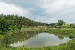 Mooi groen de zomerlandschap met rivier, bos en naaldbomen Royalty-vrije Stock Fotografie